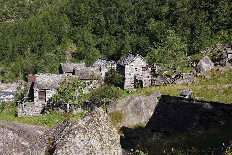 Calnegia ©Ikwaner/Wikimedia
